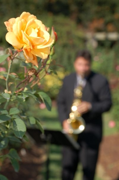 Pretty shot from a wedding ceremony I played for dear friends